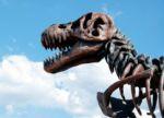 dinosaurus-innovatie-auteursrecht-skelet.jpg