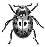 bug-disclosure